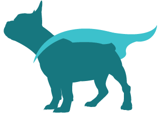 super french bulldog_flipped-18