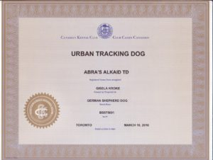 Kaid's CKC Urban Tracking Dog title (3)