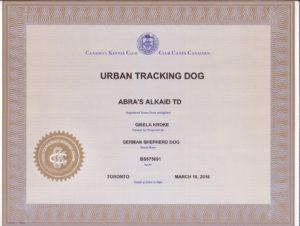 Kaid's CKC Urban Tracking Dog title (3)