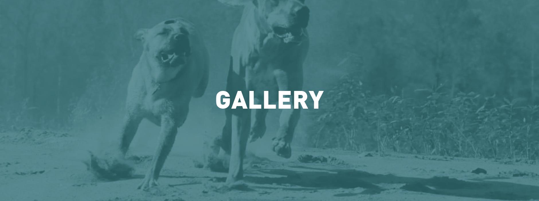 gallery_header2-11